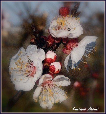 La mi primavera