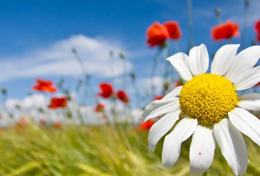 fiori-al-aprco