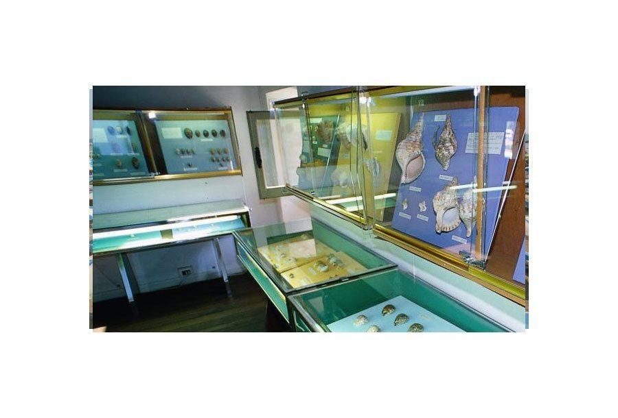 Museo delle Conchiglie di Bellaria Igea Marina