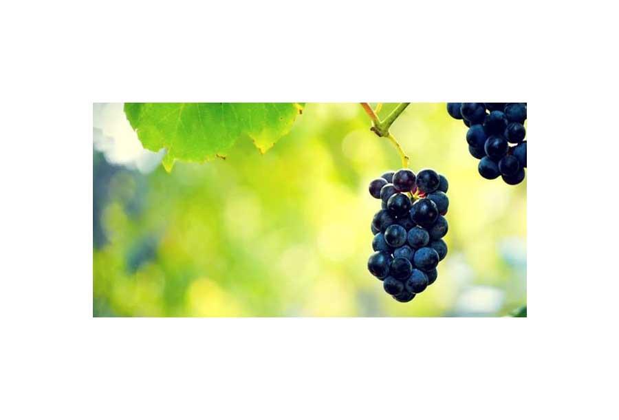 Vini di San Marino