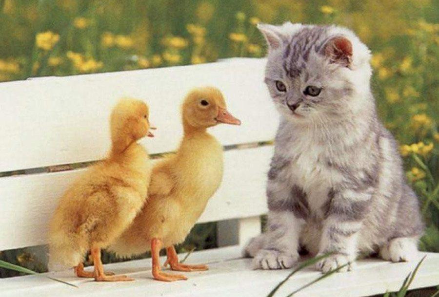 Associazione protezione animali