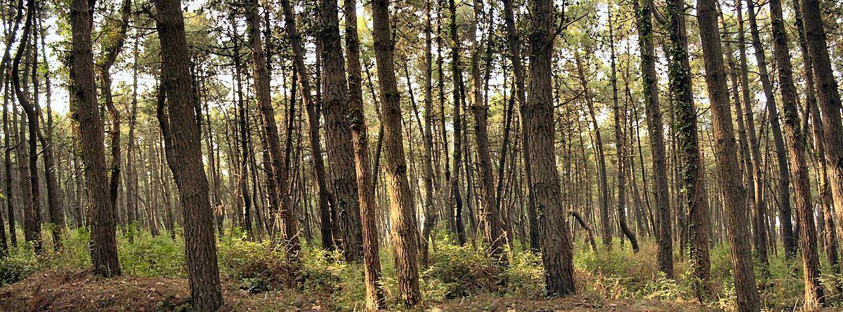 I boschi della Romagna