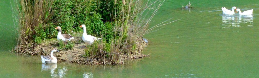 parco-della-cava-lago-artificiale