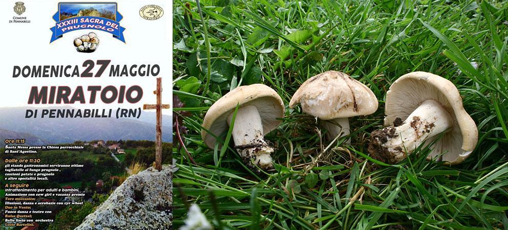 Miratoio di Pennabilli Sagra del Fungo Prugnolo