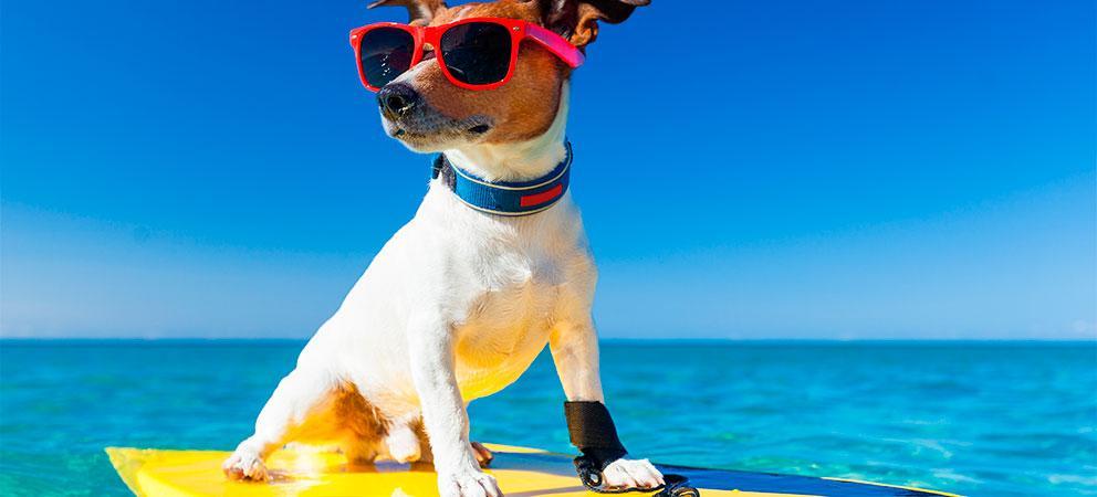 Rimini: i cani possono fare il bagno al mare