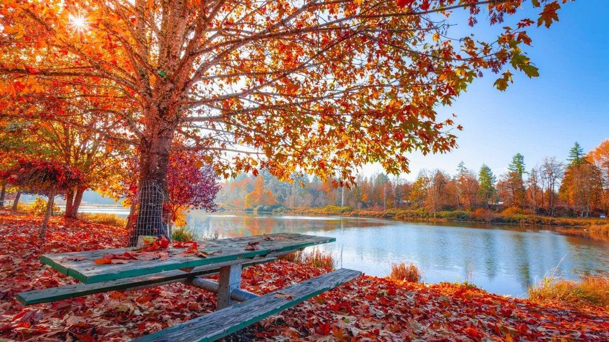 """""""Auton..."""" (autunno) di Luciano Lucien Monti"""